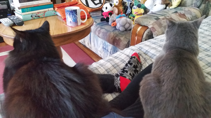 two pet cats, scarlet the black cat and bree bree the gray cat sitting on my lap