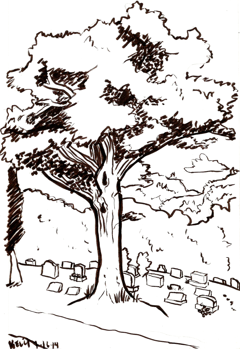 tree ink sketch